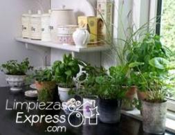 jardin en casa, beneficios de un jardin en casa, crea un jardin en casa