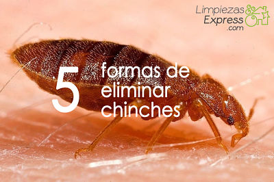 eliminar chinches de la cama, chinches en la cama, matar chinches