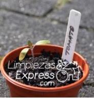 cultiva vegetales en casa, siembra vegetales en el jardín, jardín en casa