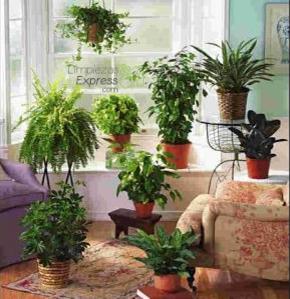 limpiar el aire de la casa con plantas, plantas para limpiar aire de casa, purificar aire de casa con planta