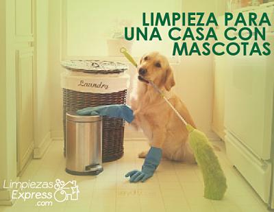limpieza profesional casa con mascotas, limpieza profesional a fondo con mascotas, limpieza profesional del hogar