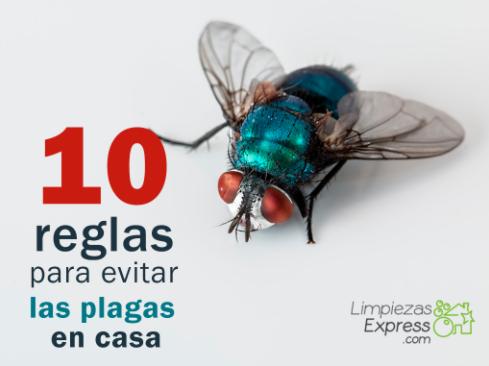 reglas para evitar las plagas en casa, como evitar plagas en casa, impedir plagas en el hogar,