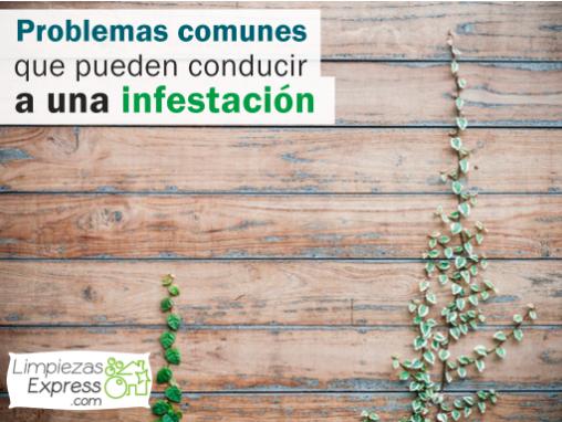 problemas que pueden producir plagas, problemas comunes que provocan infestacion, que problemas comunes provocan plagas,