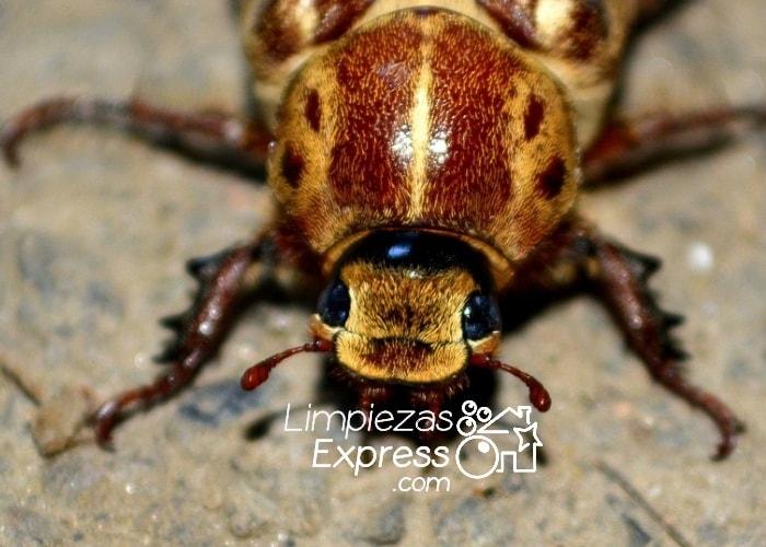 C mo eliminar las cucarachas de tu casa para siempre - Eliminar insectos en casa ...