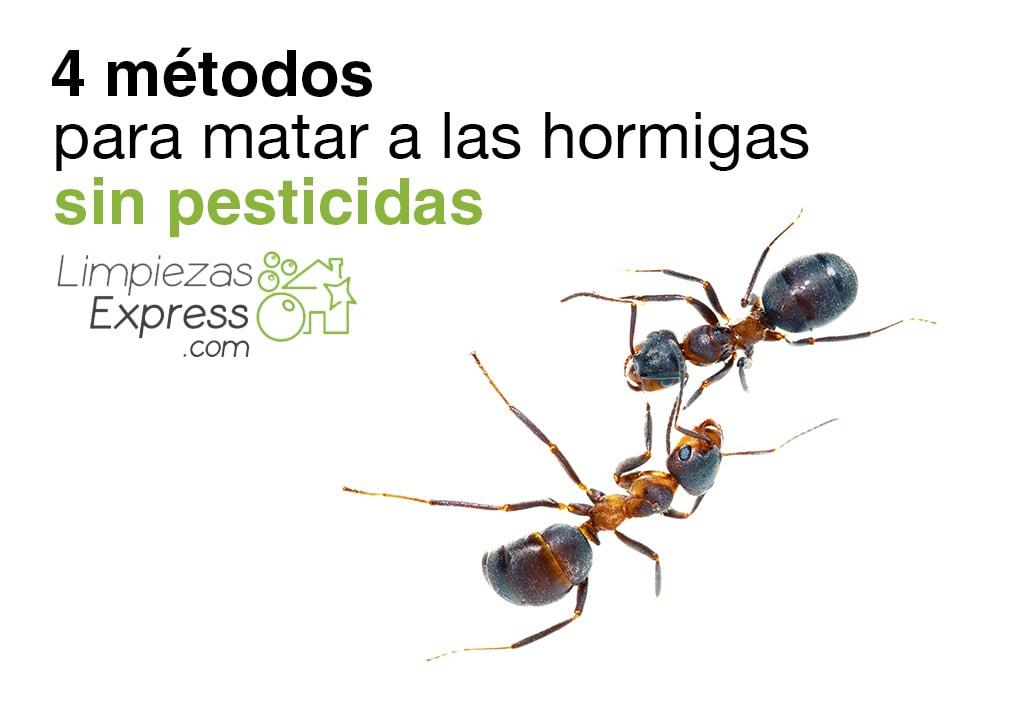 matar hormigas sin pesticidas