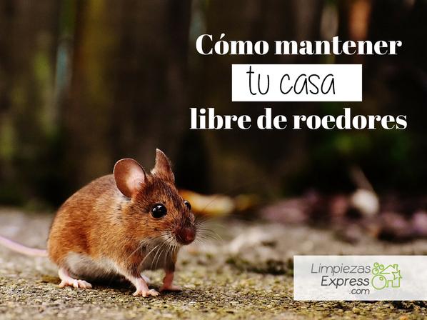 mantener casa libre de roedores
