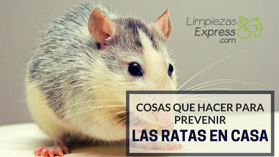 prevenir las ratas
