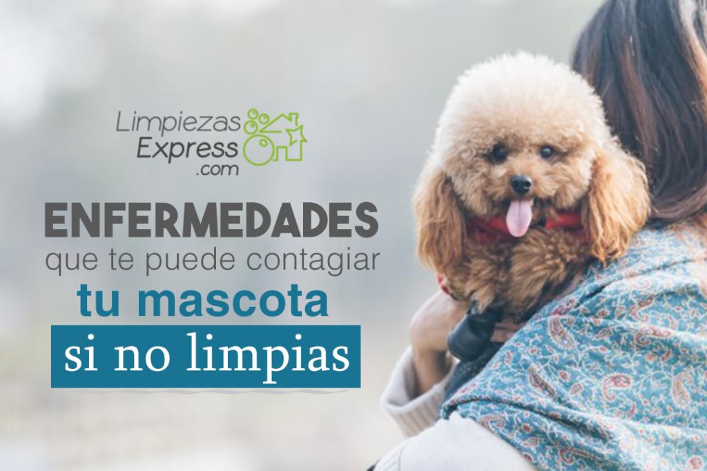 mascotas, enfermedades por no limpiar