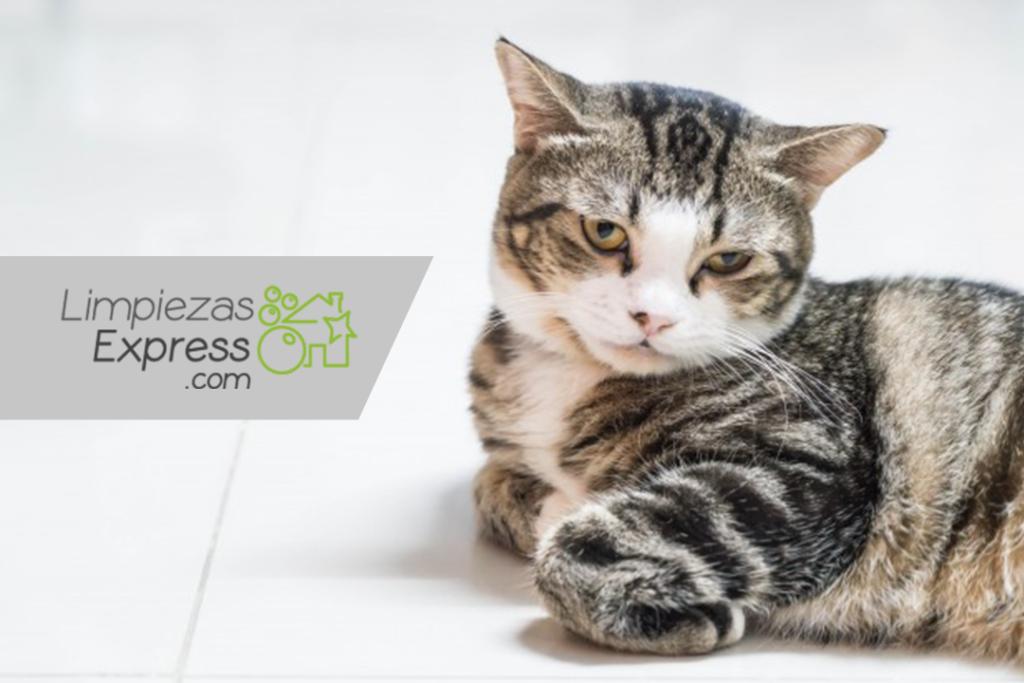 enfermedades por no limpiar, mascotas en casa