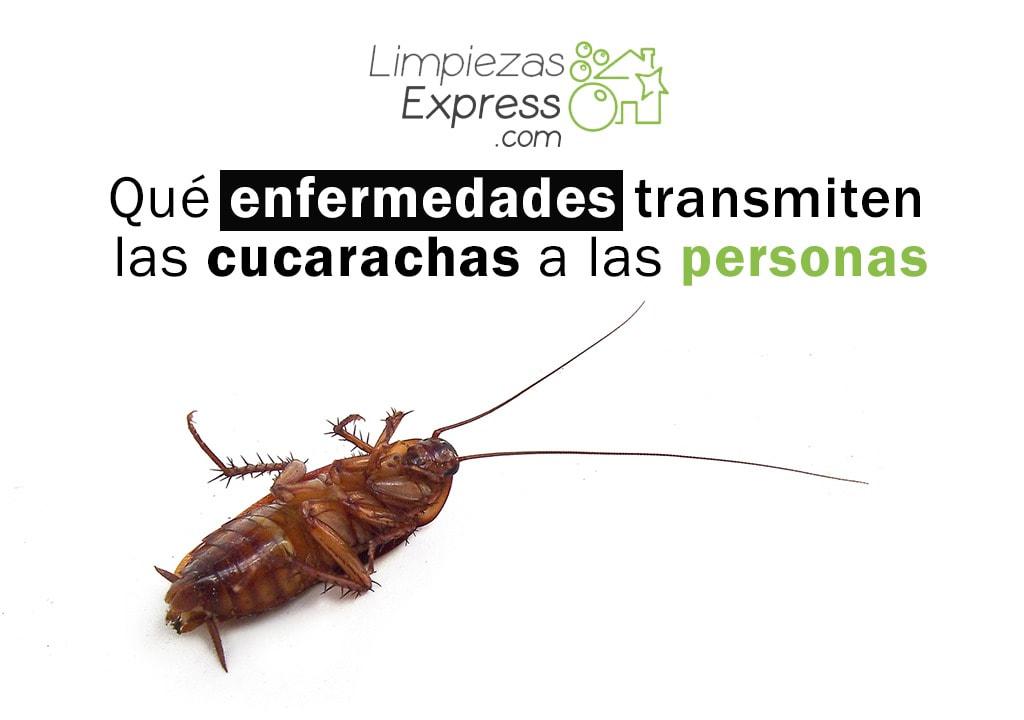 enfermedades que transmiten las cucarachas a las personas
