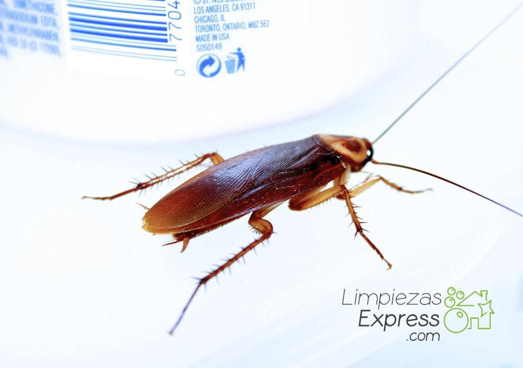 enfermedades que pueden transmitir las cucarachas