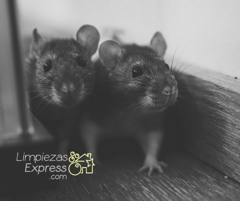 señales de ratas en tu hogar