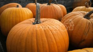 fiesta de halloween, limpiar despues de una fiesta, organizar fiesta de halloween