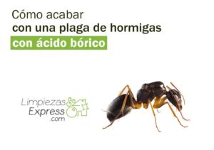 acabar con plaga de hormigas