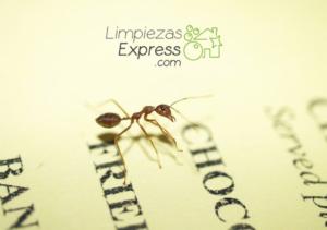 acabar con una plaga de hormiga