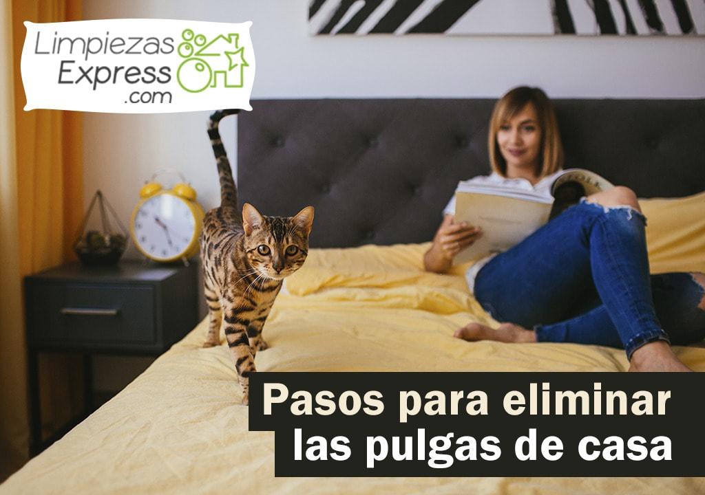 Pasos para eliminar las pulgas de casa eficazmente - Como matar pulgas en casa ...