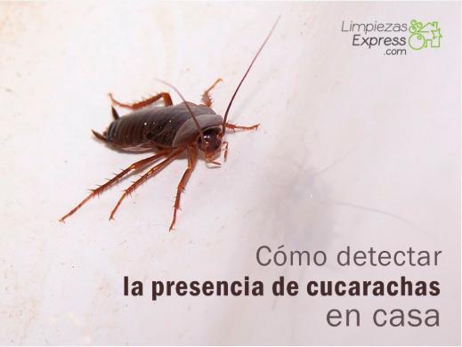 cómo detectar la presencia de cucarachas en casa, cucarachas en casa, como saber si hay cucarachas en casa,