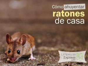 Prevenir la aparici n de ratones en casa de una forma r pida - Ratones en casa ...