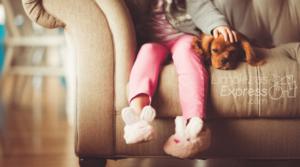 mascotas en casa, mascota ensuecie menos en casa, limpieza de casas con mascotas