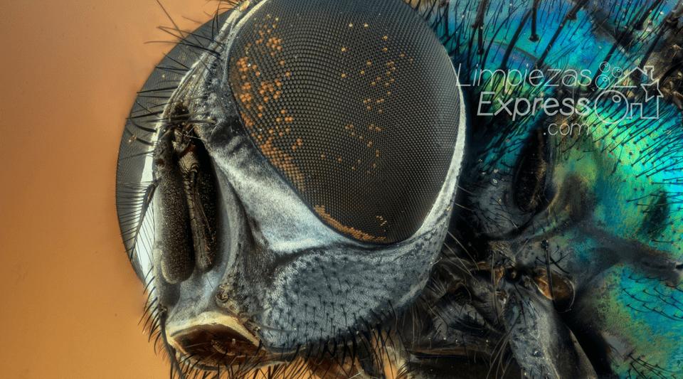 evitar plagas en casa, eliminar plagas, evitar insectos en casa
