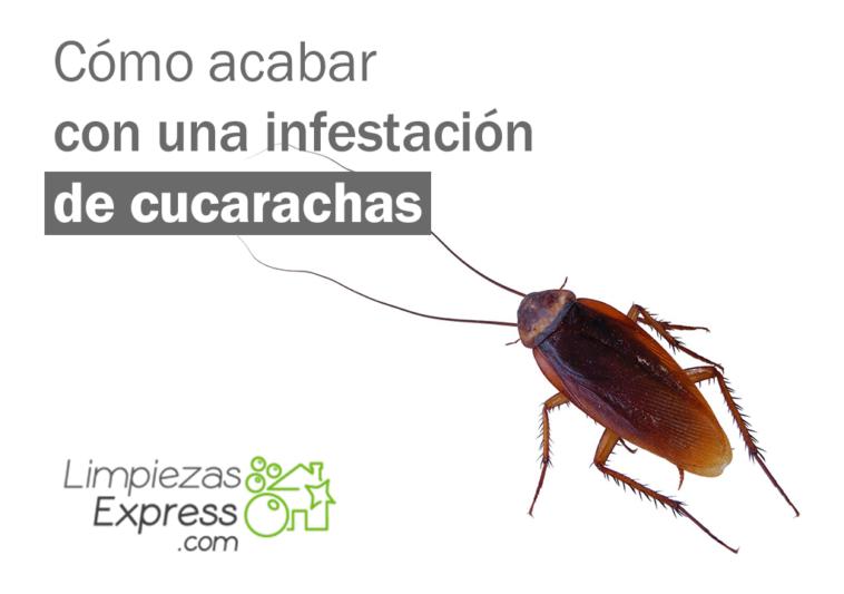 infestación de cucarachas, como acabar con cucarachas, cucarachas en casa,
