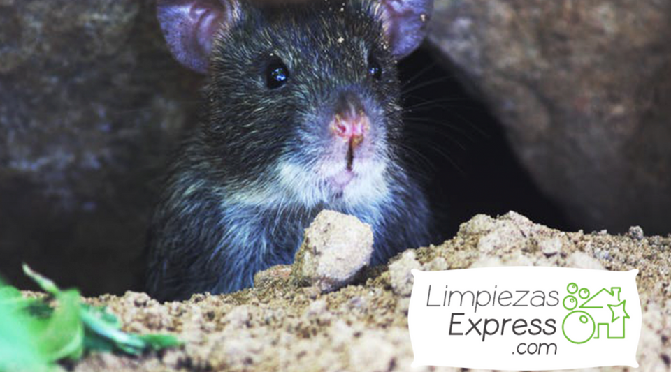 Consejos y trucos tiles y econ micos para el cuidado del hogar - Como eliminar ratones en el hogar ...