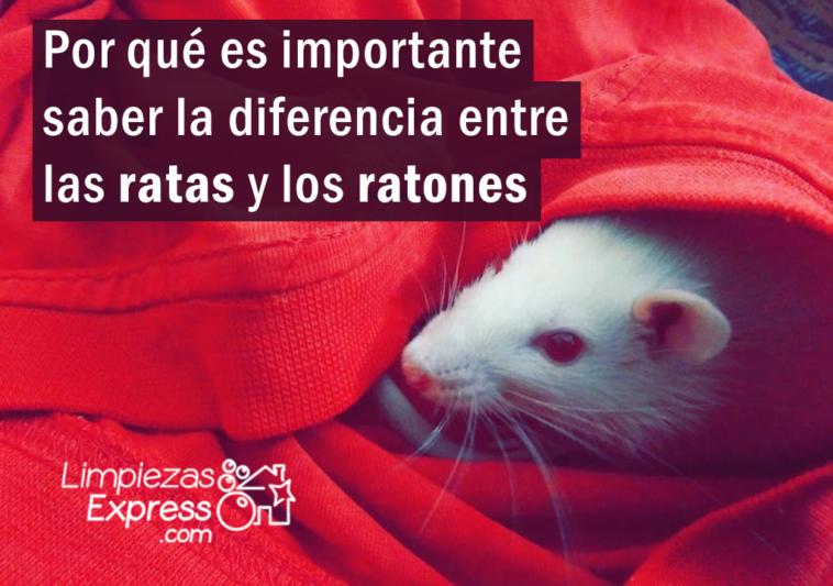 diferencia entre ratas y ratones, que diferencian ratas y ratones, distinguir ratas y ratones,