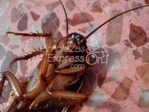 Exterminio cucarachas Madrid