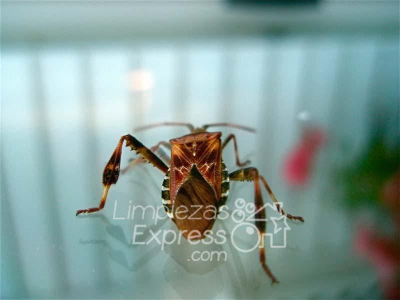 Servicio de fumigación y control de plagas de insectos