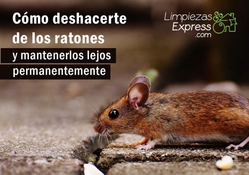 deshacerte de los ratones, cómo acabar con los ratones, terminar con una plaga de ratones,