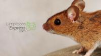 cómo deshacerte de los ratones, eliminar ratones del hogar