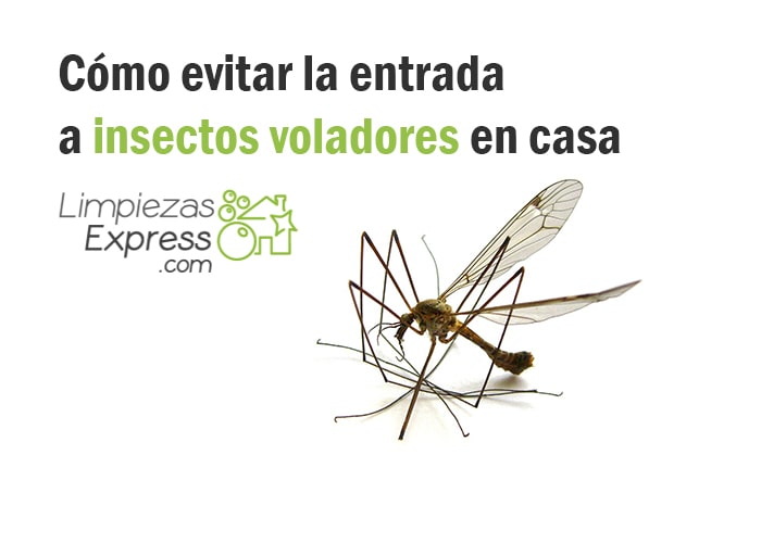 como evitar moscas, como eliminar mosquitos en casa