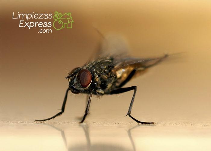 eliminar bichos, eliminar insectos de casa