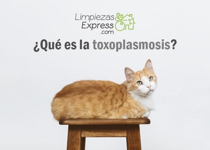 La toxoplasmosis es una infección, parasito de animales. toxoplasmosis