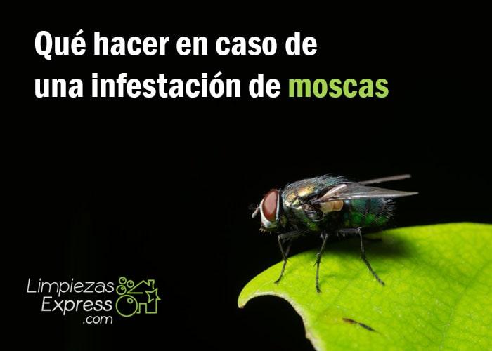 eliminar plaga de moscas, como evitar moscas en casa