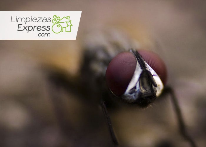 que hacer con infestación de moscas, como eliminar a las moscas, que debo hacer para eliminar moscas