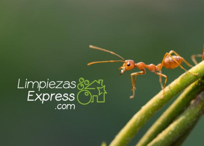 enfermedades hormigas, limpieza plagas, fumigación, eliminar plaga, hormigas