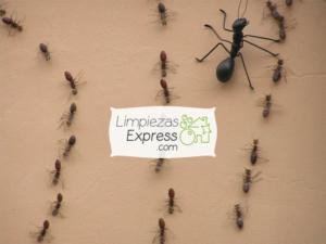Desinsectación de Hormigas en Madrid