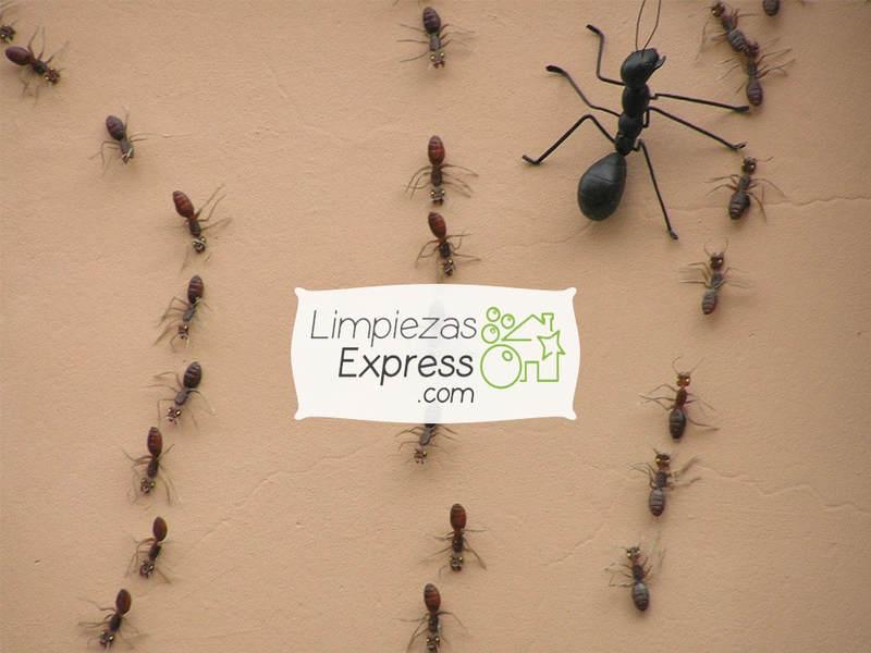 Elimine las plagas de insectos de su vivienda