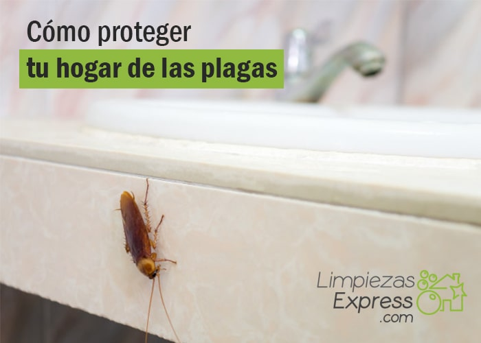 Cómo protegerte de las plagas en casa