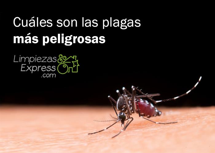 Cuáles son las plagas más peligrosas