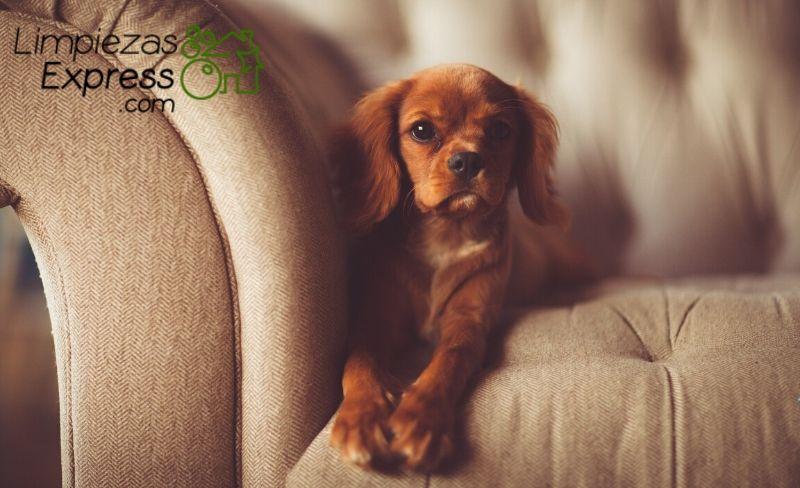 limpiar el sofá y que quede buen olor