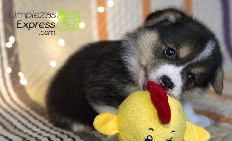 Elimina de forma fácil el olor de las mascotas en el hogar