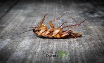 Cómo controlar las plagas de cucarachas en casa